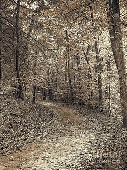 Autumn Trail by Jeff Breiman