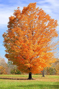 Anne Barkley - Autumn Tree 4