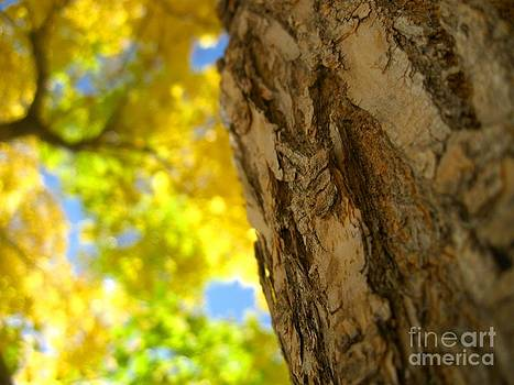 Autumn Tree by Crissy Boss