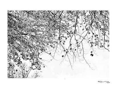 Autumn tree in black and white 3 by Xoanxo Cespon