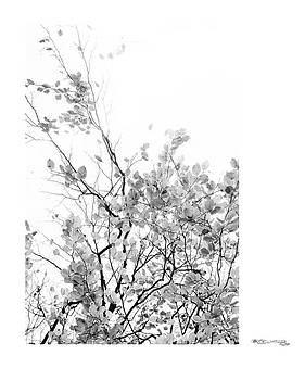 Autumn tree in black and white  by Xoanxo Cespon
