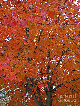 Minding My  Visions by Adri and Ray - Autumn Tree Orange and Red Leaves