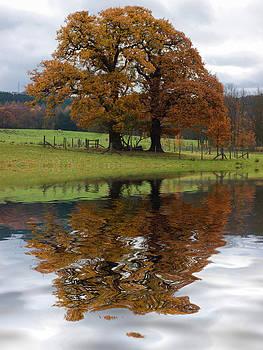 David Pringle - Autumn Tree Reflection