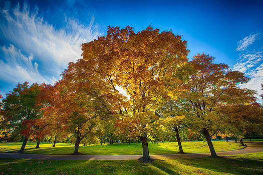 Autumn Trees by Christopher Broste