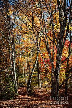 Elena Elisseeva - Autumn trees