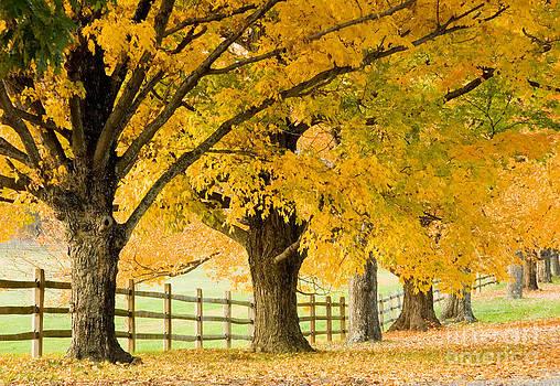 Oscar Gutierrez - Autumn Trees