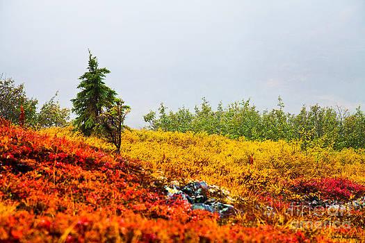 Autumn Tundra  by Chris Heitstuman