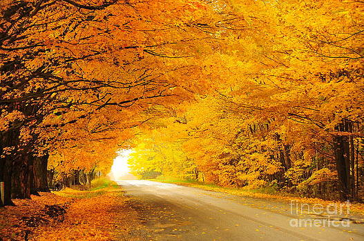 Terri Gostola - Autumn Tunnel of Gold 8