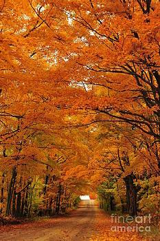 Terri Gostola - Autumn Tunnel of Trees 30