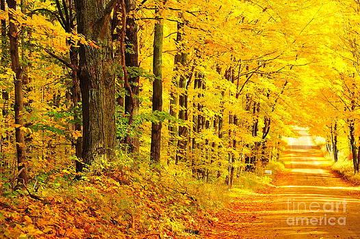 Terri Gostola - Autumn Tunnel of Trees 36