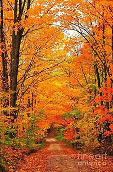 Terri Gostola - Autumn Tunnel of Trees