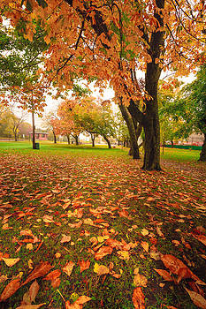 Autumn under a Tree by Gord Follett
