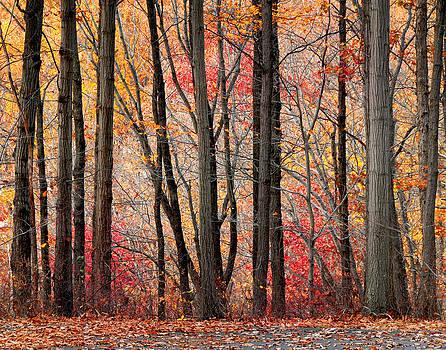 Autumn vibrance by Jay Krishnan
