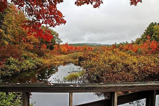 Autumn View by Sasha Wolfe