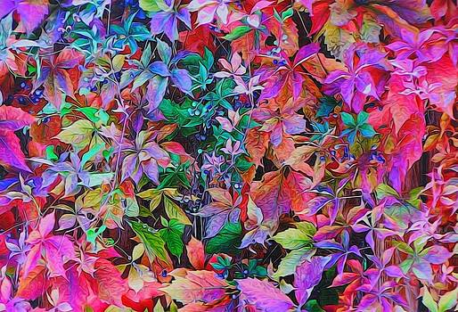 Autumn Virginia Creeper by Diane Alexander