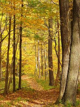 Autumn Walk in the Park by Lori Frisch