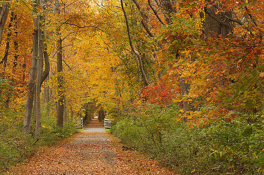 Autumn walk by Jay Krishnan