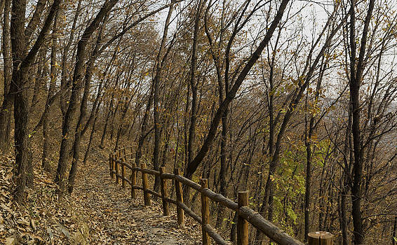 Qing  - Autumn Walking Trail