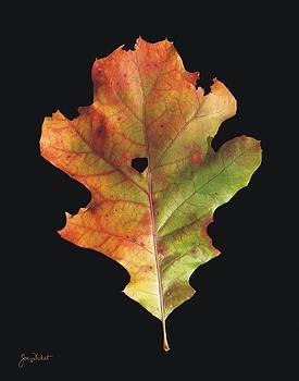 Joe Duket - Autumn White Oak Leaf 3