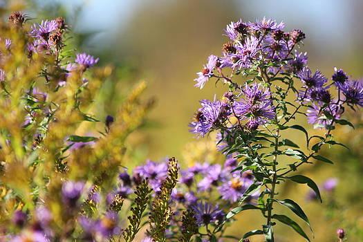 Autumn Wildflowers by Paul Hurtubise