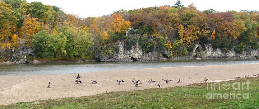 Adri Turner - Autumn Wildlife Geese and Foliage