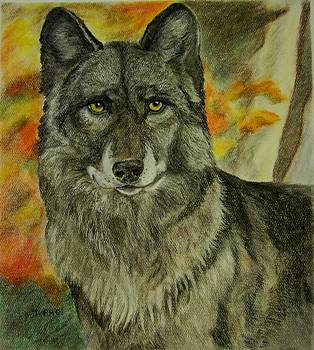 Autumn Wolf by Joan Pye