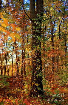 Autumn Woods by Marcel  J Goetz  Sr