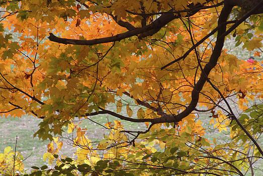Autumn067 by Kathleen Collins