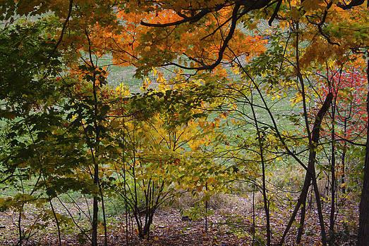 Autumn069 by Kathleen Collins