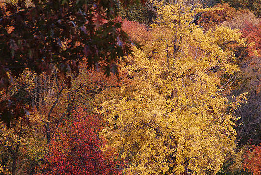 Autumn092 by Kathleen Collins