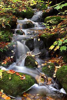 Autumnal Cascades by Guy St-Vincent