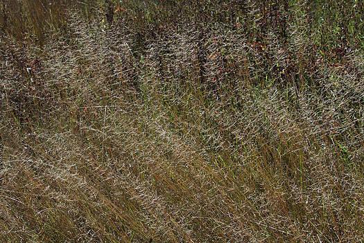 Autumnal Equinox No.3 by Carla Pivonski