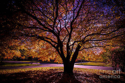 Autumnal Glow by Kim Kruger