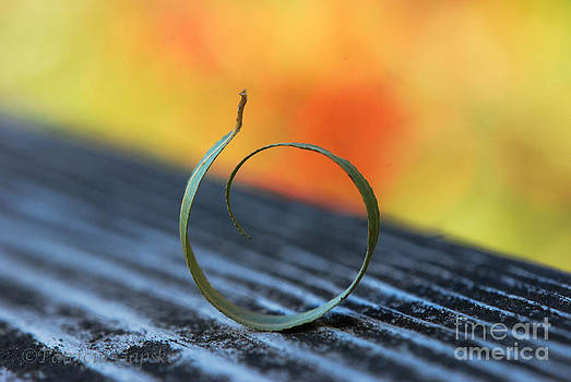 Autumnal Ring by Patricia Gapske