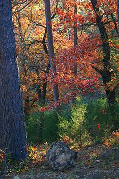 Nina Fosdick - Autumnal Rock