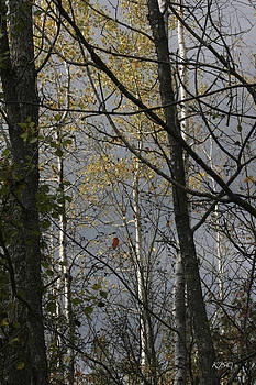 Autumns Beauty by Kathy J Snow