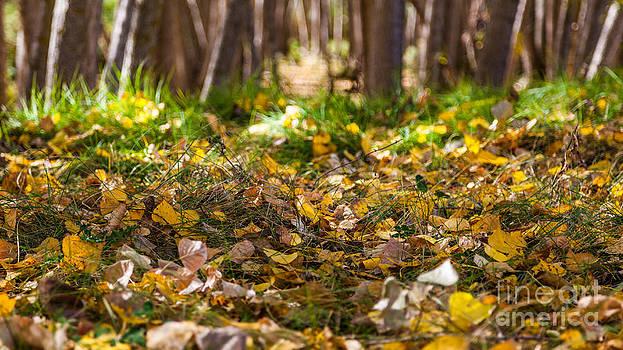 Autumn's carpet by Eugenio Moya