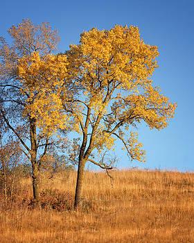 Autumn's Gold #1 by Nikolyn McDonald