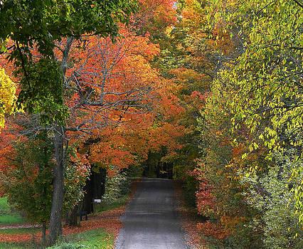 Autumns Heavenly Color by Natalie LaRocque