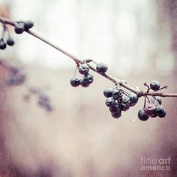 Autumn's Jewels by Mary  Smyth