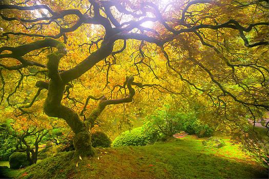 Autumn's Tree by Anthony J Wright
