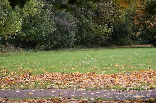 Autumn's Wondrous Colors 6 by Carol Lynch