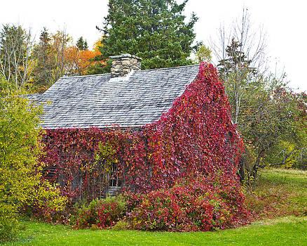 AutumnVines by Allan MacDonald
