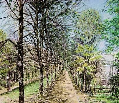 Aditi Bhatt - Avenue des arbres