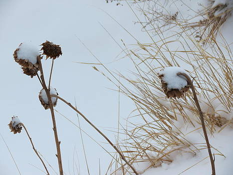 Awaiting Spring by Karen Mary Castranova