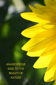 Awaken by Kim Hymes