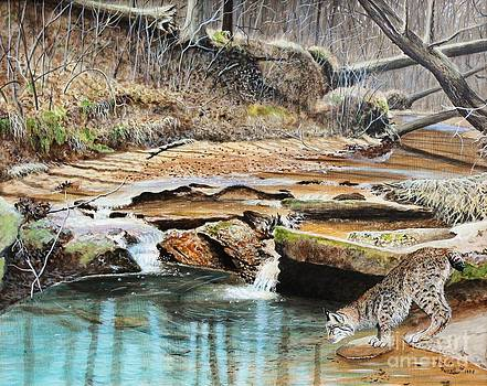 Away From Cover - Bobcat by Phillip  Powell