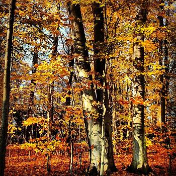 Awesome Autumn by Penny McClintock