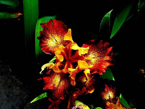 Mike Breau - Awesome Iris