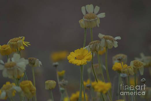 Rod Wiens - AZ Flowers